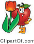 Mascot Cartoon of a Nutritious Red Apple Character Mascot with a Red Tulip Flower in the Springtime by Toons4Biz