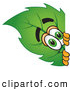 Mascot Vector Cartoon of a Friendly Leaf Mascot Cartoon Character Peeking Around a Corner by Toons4Biz